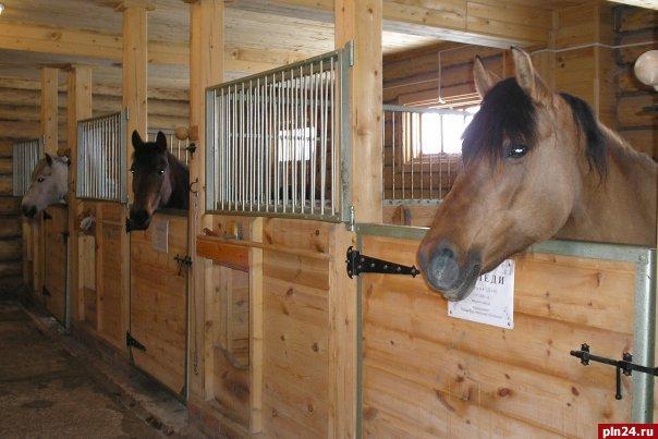 ...малоприятных личностей. лошади очень милы и общительны. даже жеребята.