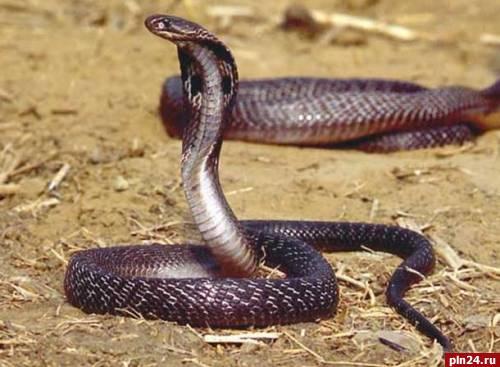 2013 год Змеи: как отмечать