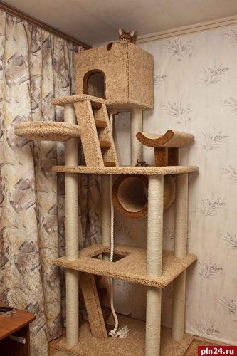 Игровые стойки для кошек