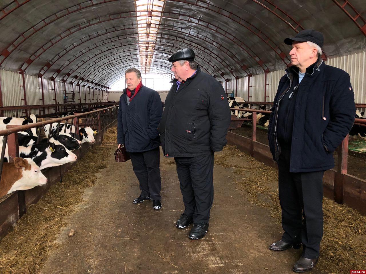 ВПсковской области открылась новая молочная ферма