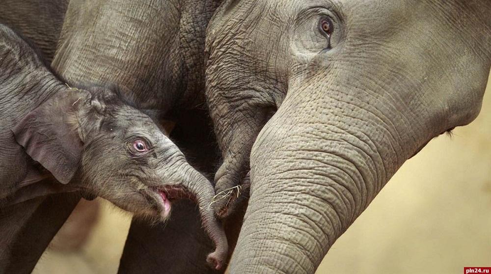 Ученые пояснили, почему слоны— самые заботливые идобрые животные вмире
