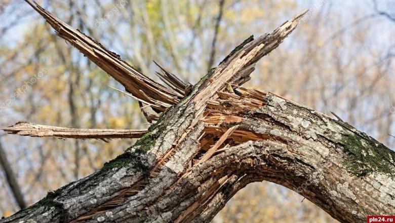 Последствия грозы вПсковской области будут устранять всю ночь