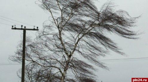 Штормовой ветер ожидается в Псковской области в ближайшие часы