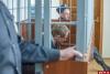 Судебное следствие по делу об убийстве отца Павла Адельгейма завершено