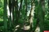 Дмитрий Быстров поддержал идею возрождения старинного дворянского парка, как туристического бренда Горайской волости