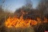 В Псковской области зарегистрированы первые палы сухой травы