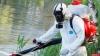 Ганза в Пскове пройдет без клещей и комаров