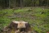 Парламентарии Северо-Запада выступили за ужесточение наказания за уничтожение мест обитания животных