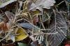 Ночные заморозки придут в Псковскую область 18 сентября