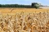 Псковская область в лидерах в СЗФО по сбору урожая