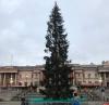 Главную елку Лондона осмеяли в соцсетях за унылый вид