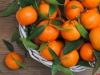 Поставки мандаринов из Абхазии в Россию сократились в два раза из-за неурожая