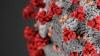 Число госпитализированных с подозрением на коронавирус выросло в Псковской области  до 21