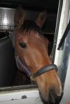 Четыре лошади успешно прошли ветеринарный контроль на российско-латвийской границе в Псковской области