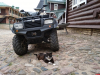 Еще один кот из Псково-Печерского монастыря стал звездой интернета