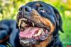 Псковские полицейские применили оружие против агрессивной собаки