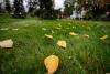 До 23 градусов тепла прогнозируют завтра в Псковской области