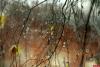 Небольшой дождь ожидается в Псковской области в субботу