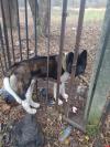 Псковские зоозащитники оказали экстренную помощь застрявшей в заборе собаке. ВИДЕО