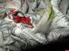 Почти 150 кг червевидных личинок не пропустили в Псковскую область из Белоруссии