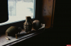 Безработный оставил боевую гранату в банке из-под кофе под дверью псковички