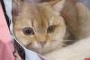 Огуречный цепень обнаружен у кошки в Псковской области