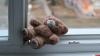 Следователи опросили свидетельницу падения ребенка из окна в Великих Луках