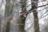 В ночь на воскресенье в Псковской области ожидается мокрый снег