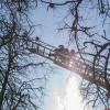 В Пскове спасли застрявшую на дереве кошку