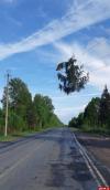«Летающие» ели повредили ЛЭП в Псковской области