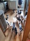 Проживающие в квартире псковской вдовы 74 кошки могут оказаться на улице