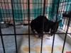 В Пскове прокуратура проводит проверку по сообщению о доставке в приют котов в мешках
