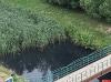 В Великих Луках взяли пробы воды из ручья со зловонным запахом