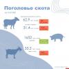 Псковстат пересчитал коров, свиней и овец в хозяйствах региона