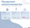 Производство яиц сократилось в Псковской области почти на 4%