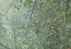 Ливень ожидается сегодня в Псковской области