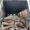 Россельхознадзор и пограничники пресекли незаконный ввоз говядины в Псковскую область